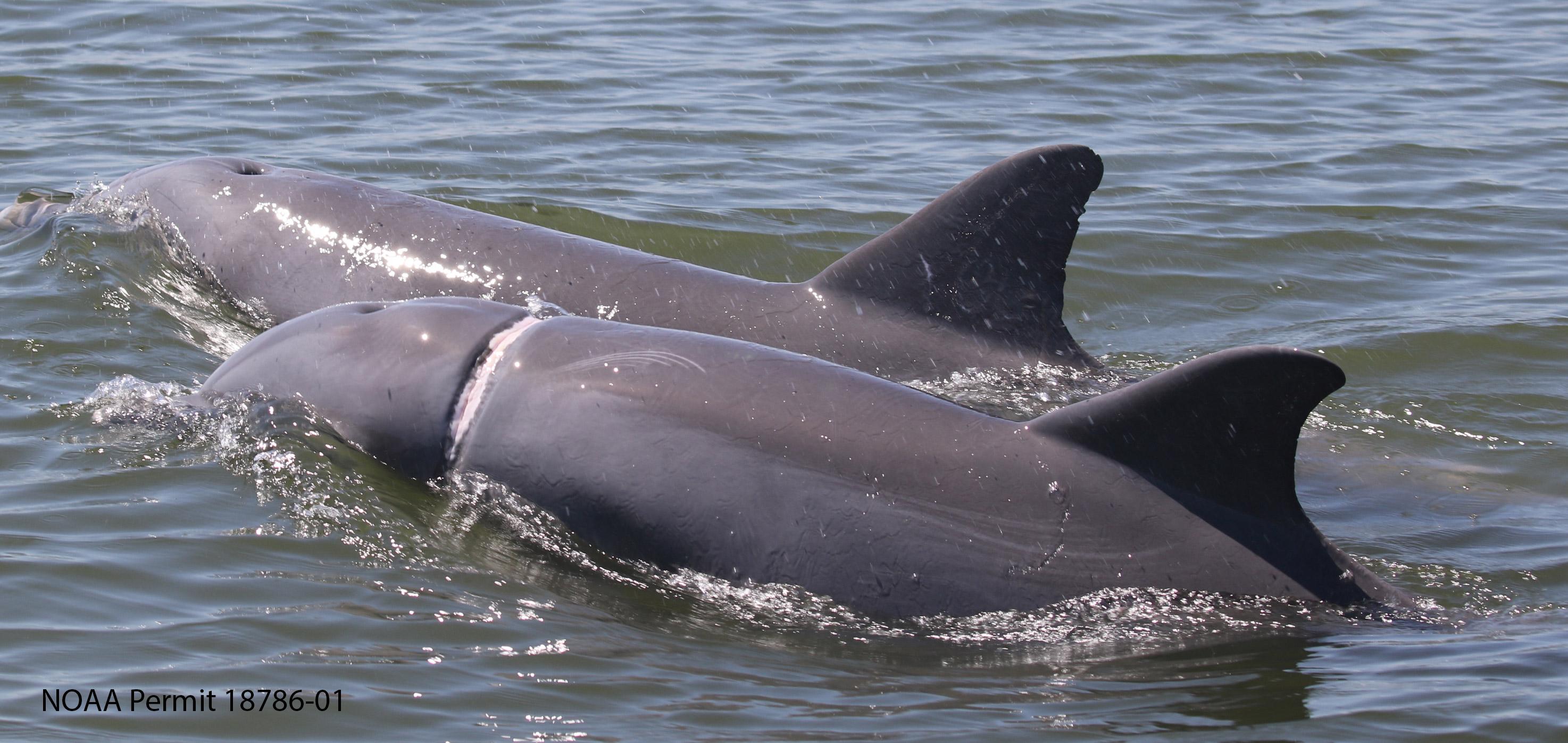 carmmha-dolphin-rescue-4